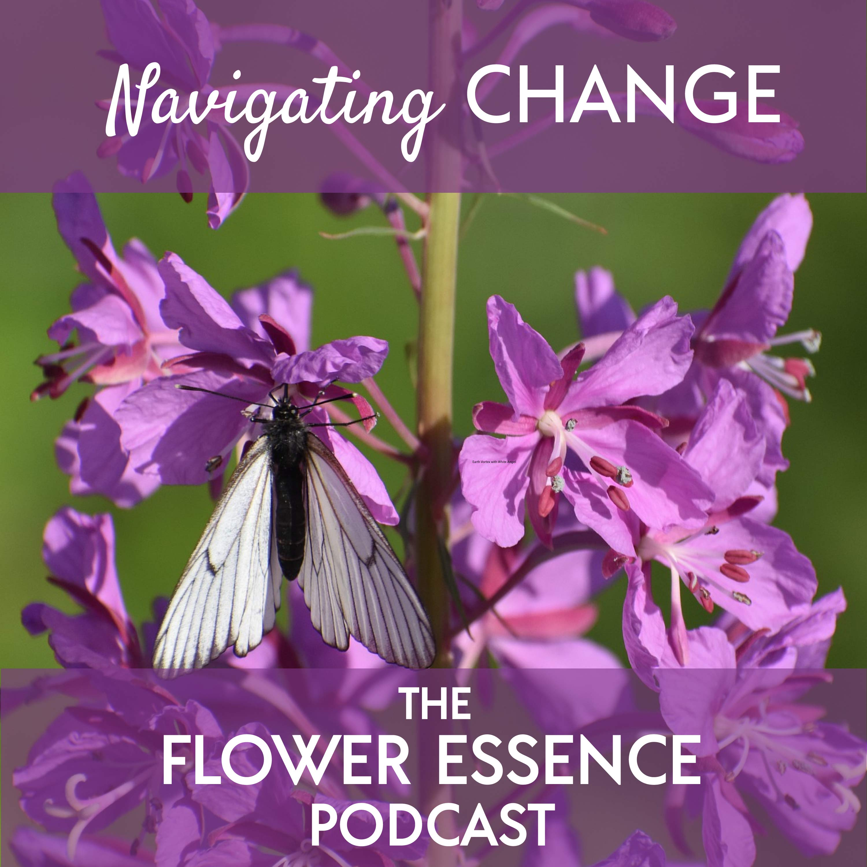 flower essence for change